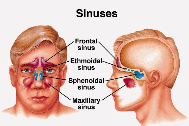 sinüzit nasıl tedavi edilir, sinüzit belirtileri nelerdir, sinüzit nasıl geçer, sinüzit olan kişi ameliyat olmalı mı
