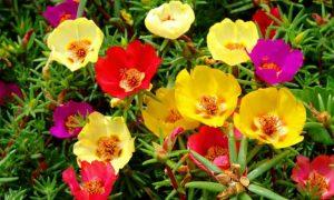 çiçek suyuyla güzelleşme, çiçek sularıyla güzelleşme yöntemleri